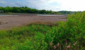 Bán đất MT đường Lý Nhơn_Huyện Cần Giờ diện tích: 18000m2