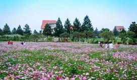 Tầm nhìn triệu đô tại The Phoenix Garden, thị trấn Phùng, Đan Phượng