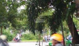 Cho thuê đất 2 mặt tiền đường song hành - an phú - quận 2