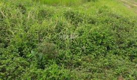 Cho thuê đất trống đường đặng thúc vịnh, hóc môn, diện tích 700m2, thổ cư 100%, giá 10tr/th