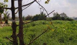 Cho thuê đất sân vườn 560m2, bờ sông sài gòn, q.12. giá rẻ đẹp chỉ 10tr/th, lh