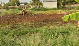 Bán đất 117m2 đất thổ cư hẻm 3m, gần Ủy Ban Nhân Dân Xã Phước Lâm, gần đường DH 20