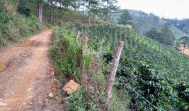 Bán 2.5 ha đất vườn cafe xã Phi Tô,Huyện Lâm Đồng, cách Đà Lạt 40KM